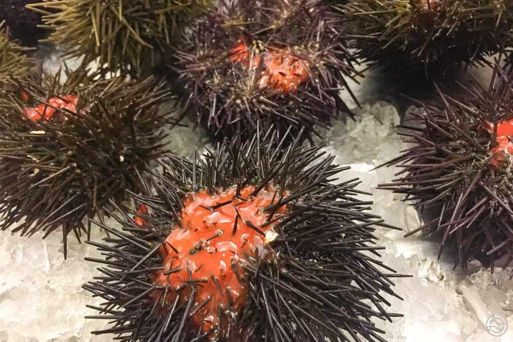 Festival Internacional do Ouriço do Mar International Sea Urchin Festival