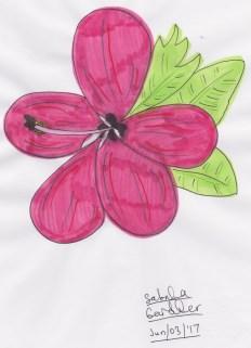 magentahibiscusflower