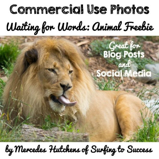 Free Commercial Use Photos: Waiting for Words.  Perfect for blog posts and social media.