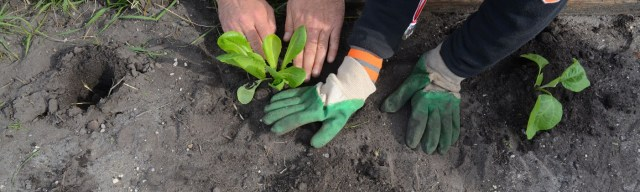 Photo Y Le Toquin - Surf Insertion - potager ares (10)