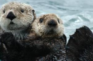 couple otter2