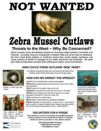 Zebra Mussel Not Wanted Poster200x259