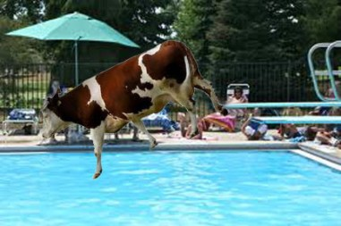 cow pool diving board