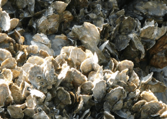 oyster-bed-lrg.jpg