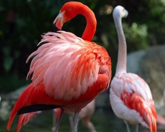 Lightmatter_flamingo