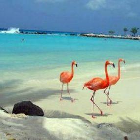 Plastic flamingo at beach