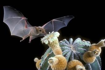 bat with flower