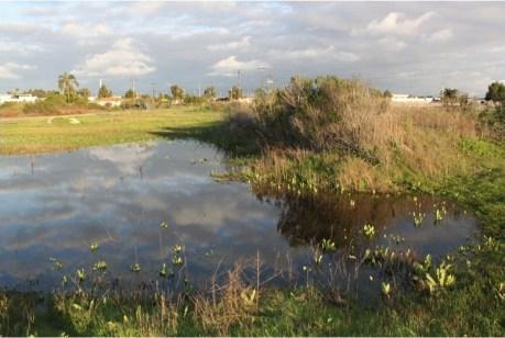 banning-wetlands