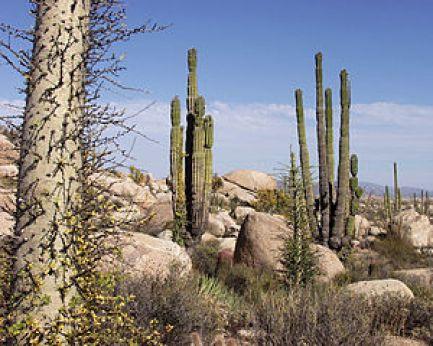 california_desert