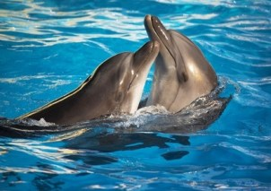 Visit the Dolphins in the Outer Banks