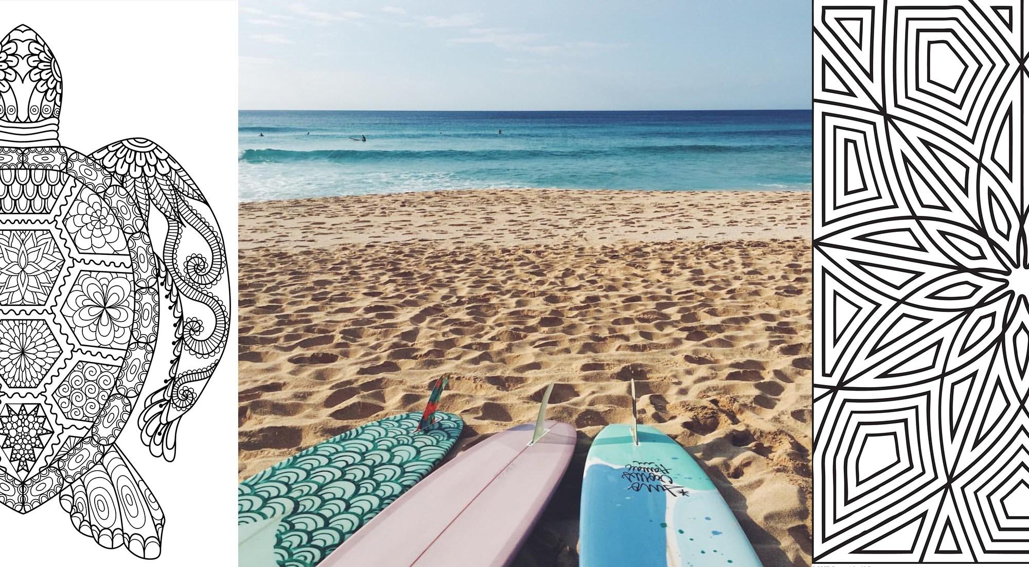sprzęt surfingowy