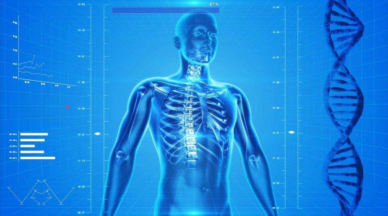 человеческий организм