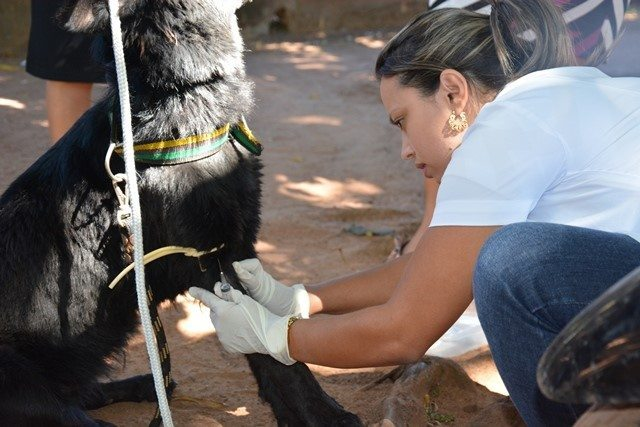 SEMUS de Paraíso realiza inquérito canino para combater leishmaniose