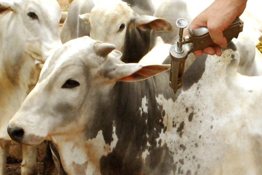 Brasil recebe certificação de país livre da febre aftosa com vacinação