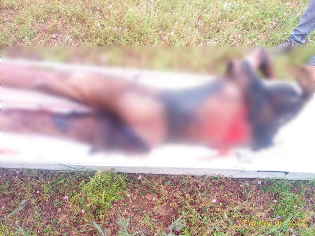 Corpo é encontrado em chácara no setor Vila Regina em Paraíso TO