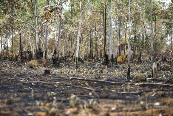 MPTO ajuíza ações contra empresários rurais que desmataram 1.532 hectares de reservas legais