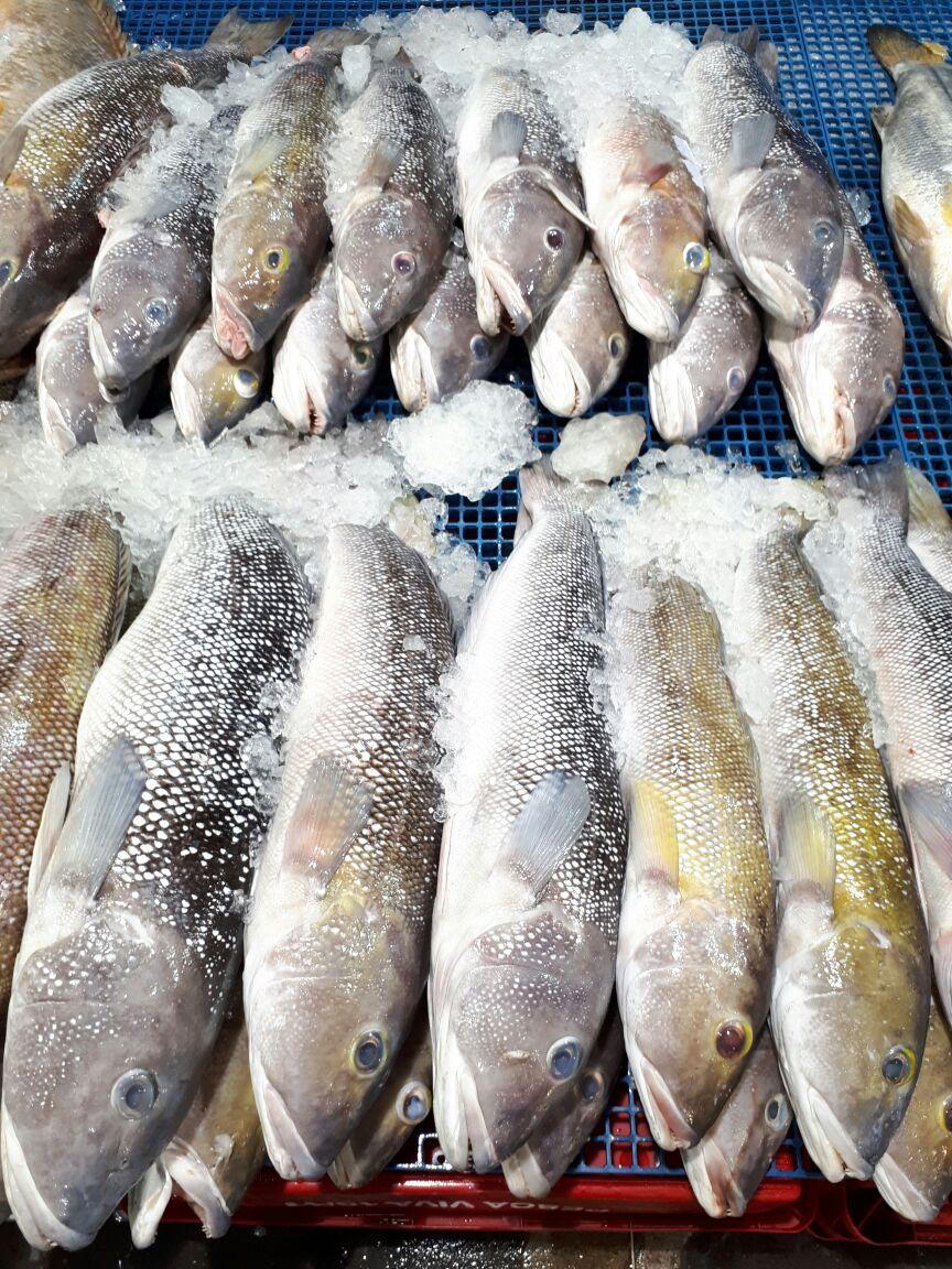 Cuidados na hora de comprar peixe na Semana Santa