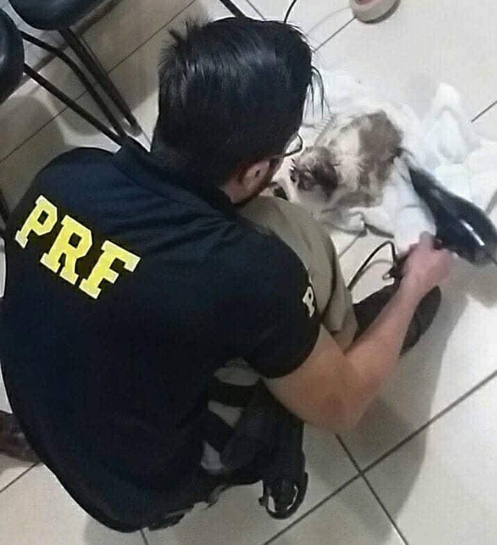 PRF resgata 4 cachorros vítimas de maus-tratos
