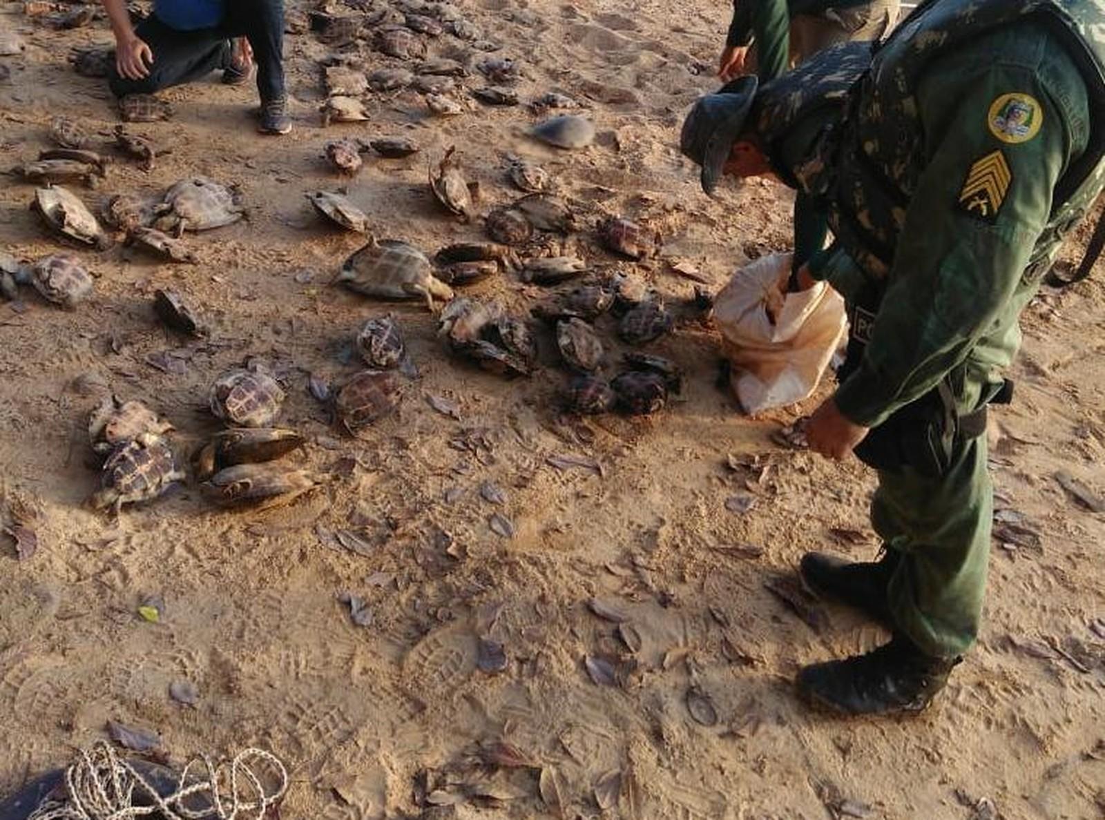 Mais de 120 tartarugas capturadas ilegalmente são resgatadas no rio Araguaia