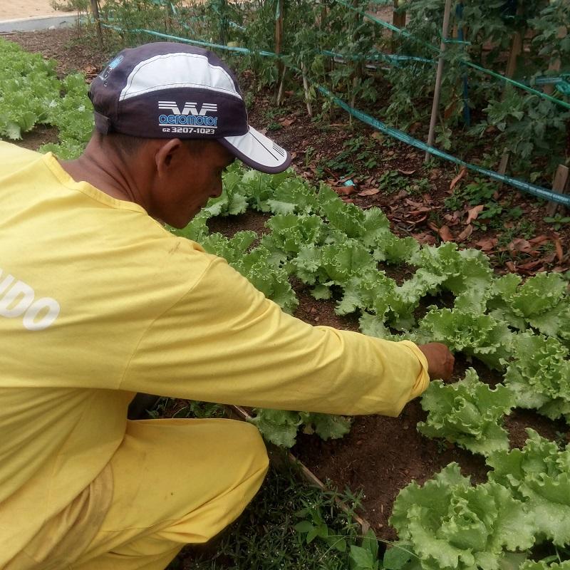 Reeducandos começam a consumir verduras produzidas nas hortas da CPP Palmas e UTPBG