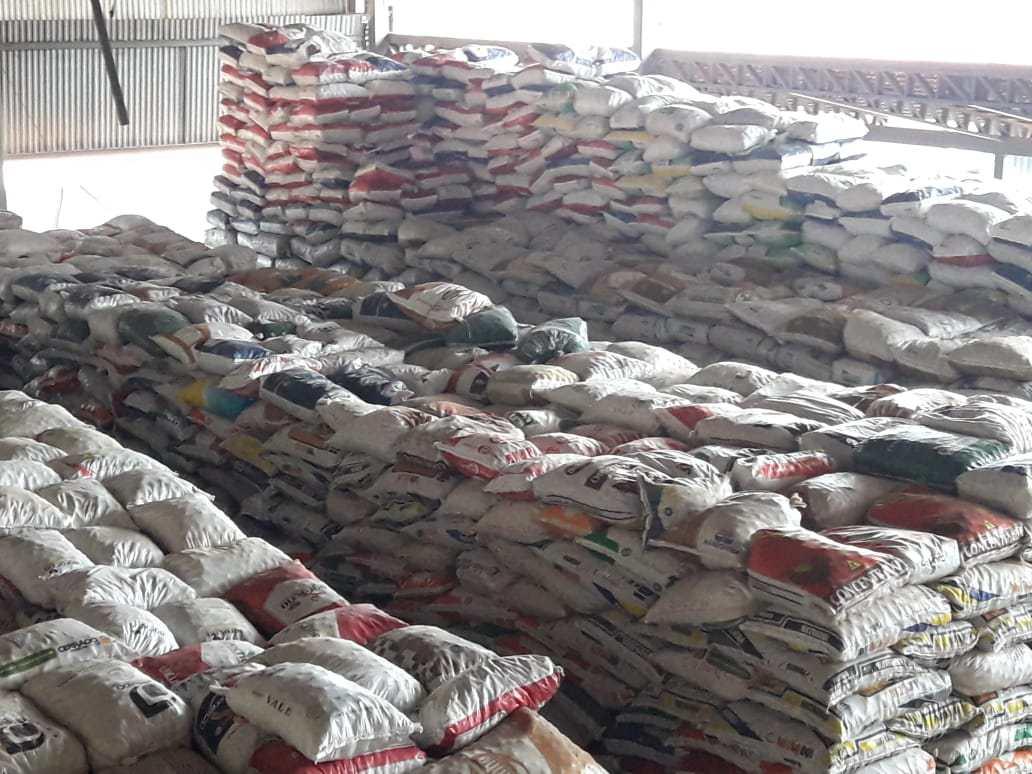 CoopBrasil já contabiliza mais de 50 mil sacas de baru coletados nas suas 7 unidades
