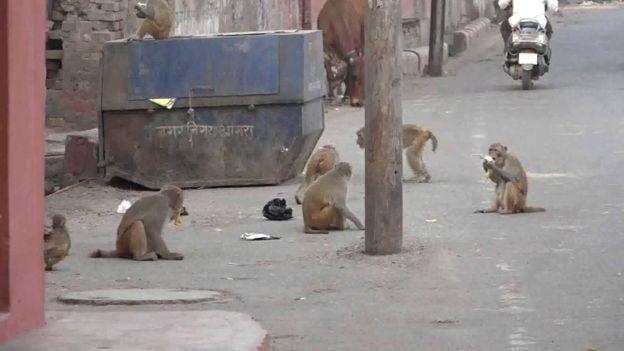 Macaco rouba e mata bebê de 12 dias na Índia