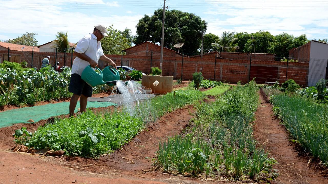 Dia Técnico sobre Controle Alternativo de Pragas e Doenças voltado para produtores de hortaliças acontece nesta terça, 11