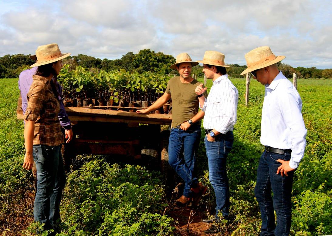Projeto Campo Sustentável inicia plantio de mudas em fazenda piloto
