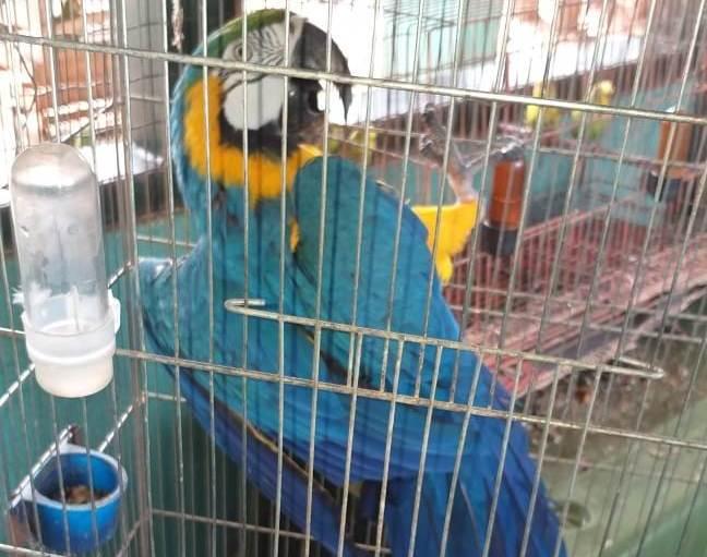 Naturatins recebe cerca de 50 animais abandonados recuperados em residência de Palmas (TO)