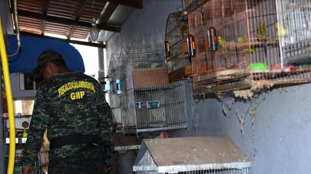 GMP resgata 37 animais silvestres em cativeiro na região central de Palmas