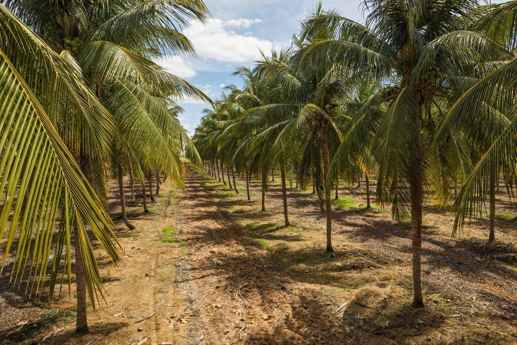 PepsiCo promove cadeia sustentável do coco verde