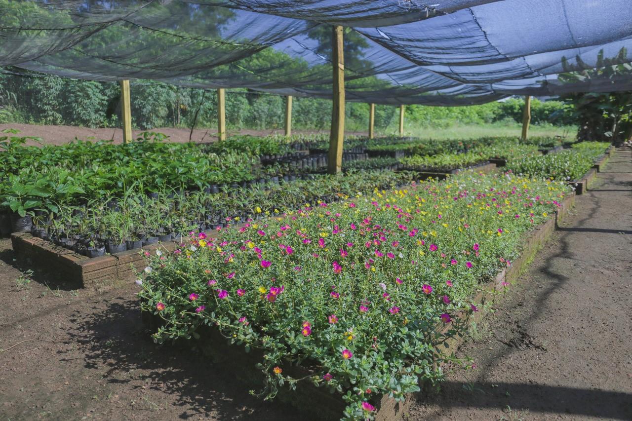 Dia da abelha: Unidades de Conservação Municipal em Gurupi asseguram sobrevivência da espécie