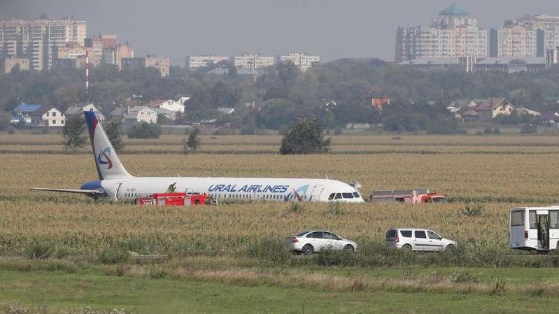 Piloto faz 'pouso milagroso' em milharal após avião se chocar com pássaros na Rússia