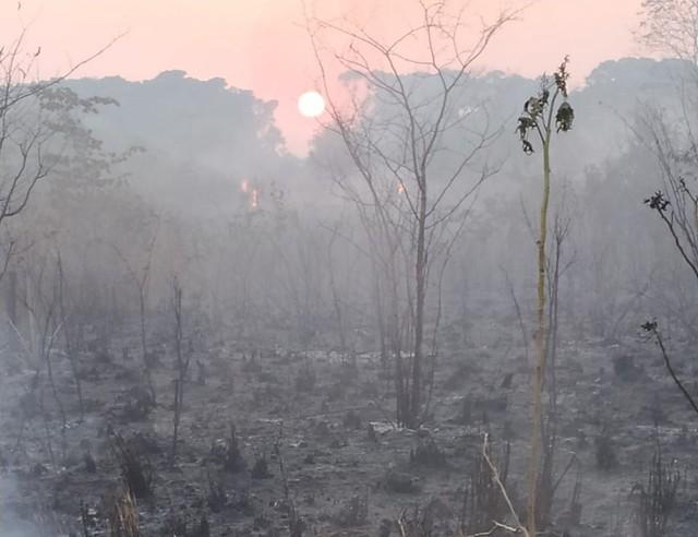 Brigadistas combatem incêndio há sete dias na região sul do estado