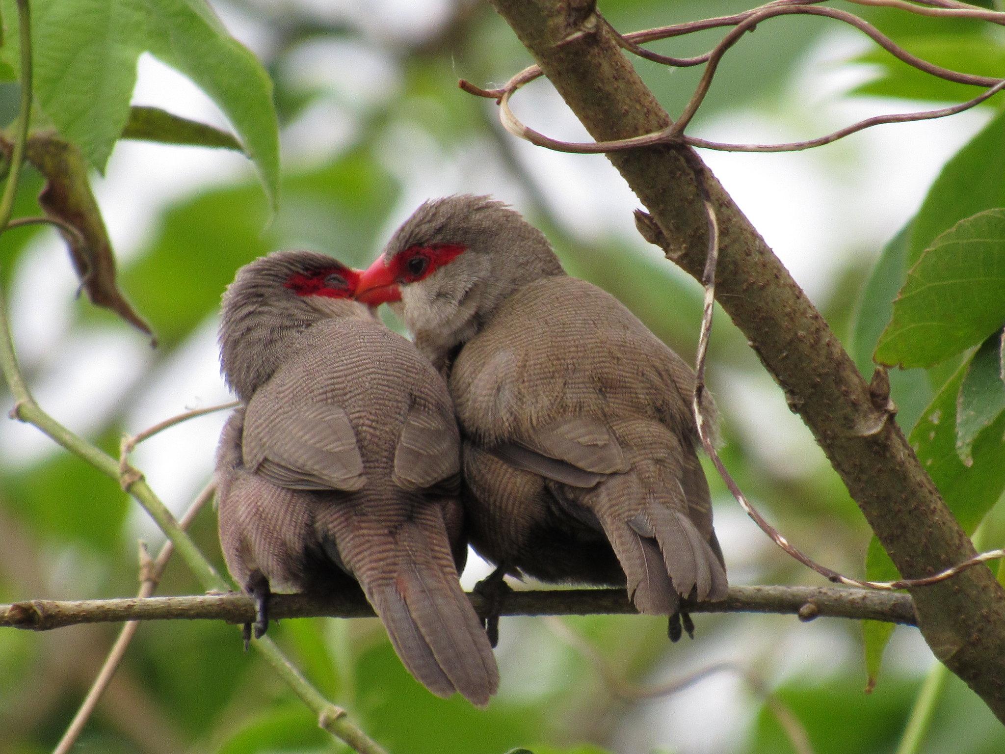 Festival de Aves movimenta Ilhabela a partir deste final de semana