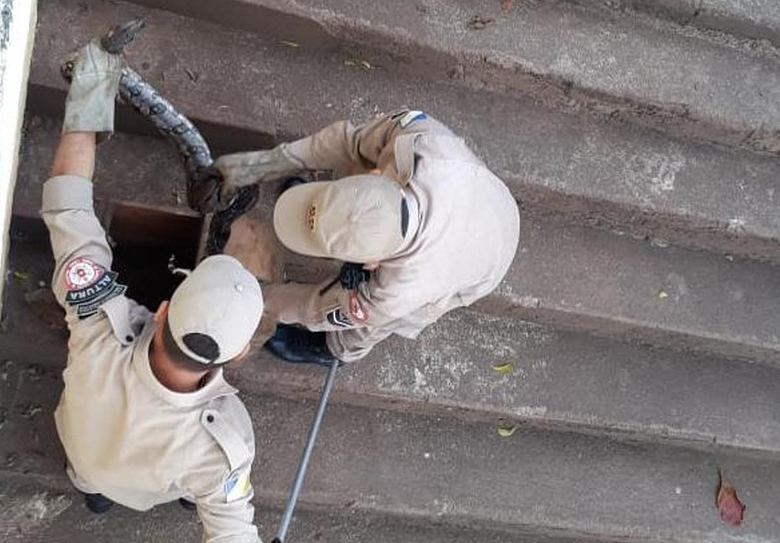Jiboia com mais de 1 metro é capturada em escadaria do cais de Araguatins