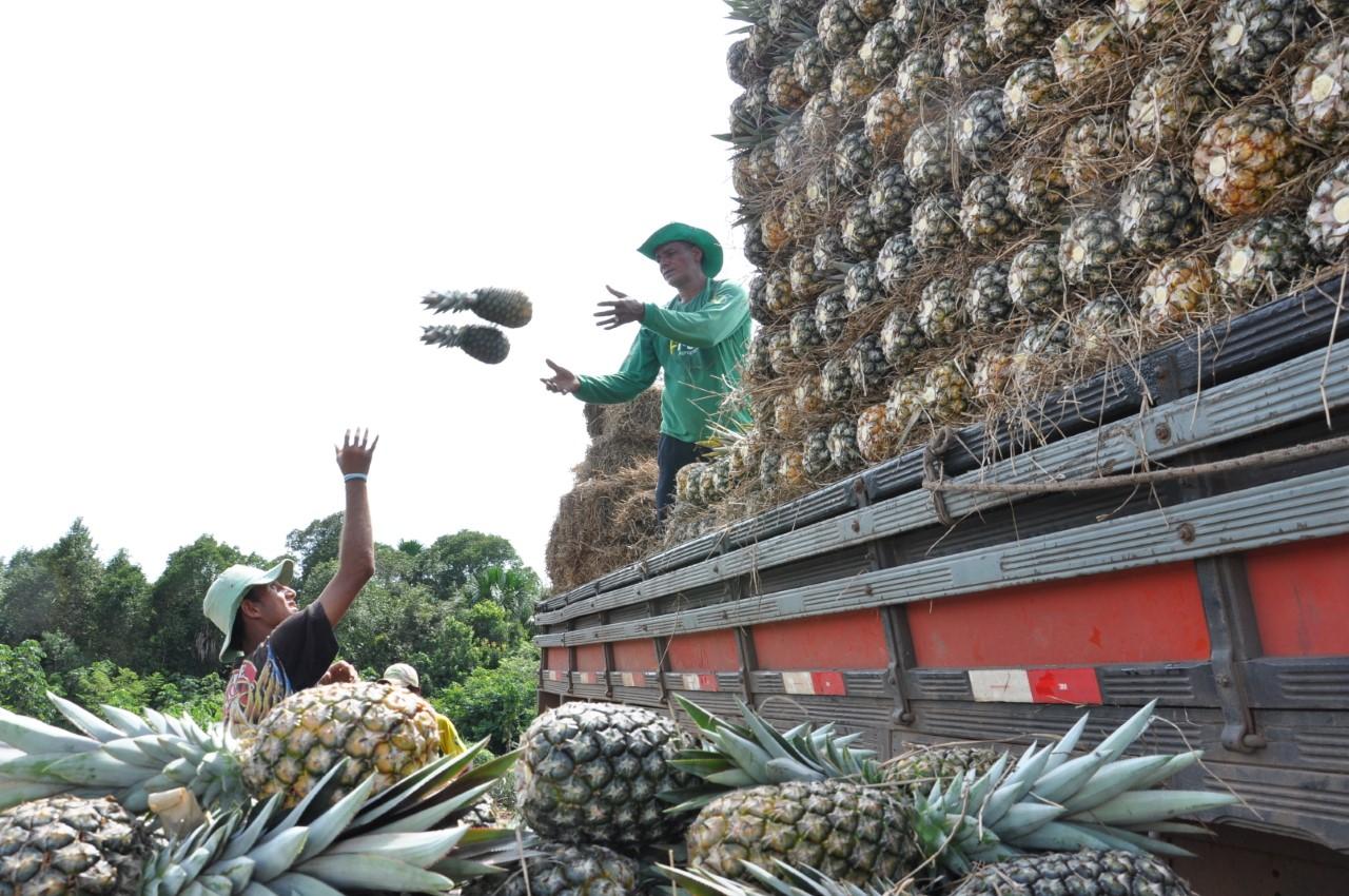 Produção de frutas no Manuel Alves deve crescer em torno de 15% em 2020