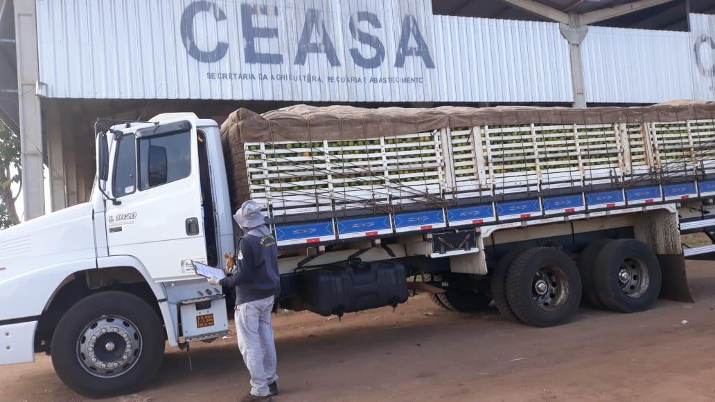 Novo sistema de emissão de Permissão de Trânsito de Vegetais (PTV) online facilita avida de produtores rurais