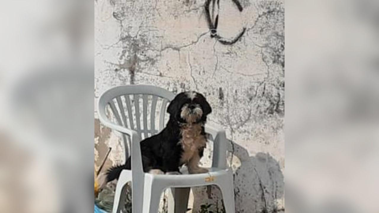 Família procura por cachorrinho desaparecido em Paraíso do Tocantins