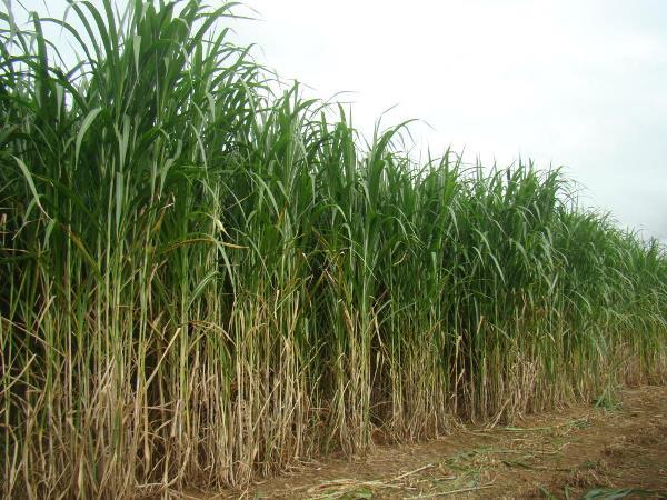 Governo trabalha na implantação de Unidade de Pesquisa e Extensão Rural do Tocantins