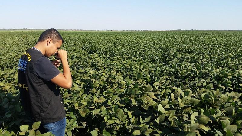Adapec prorroga prazo para cadastro das áreas produtoras de soja sequeiro no Tocantins