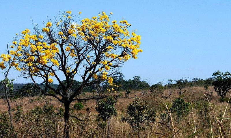 Projetos de conservação do Cerrado podem receber até US$ 30 mil