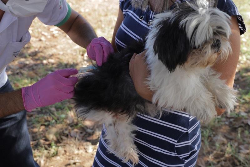 Cães e gatos que ainda não receberam a vacina da raiva em Palmas poderão ser imunizados nesta sexta, 17