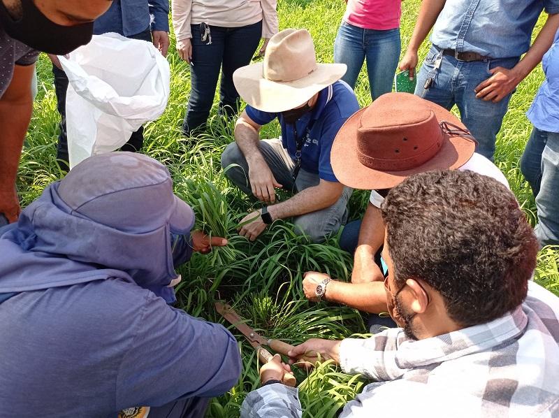 Técnicos do Senar são capacitados para levar tecnologia a produtores rurais do estado