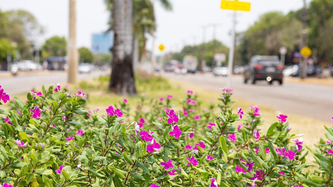 Estação mais colorida do ano, a primavera chega com altas temperaturas e baixa umidade do ar