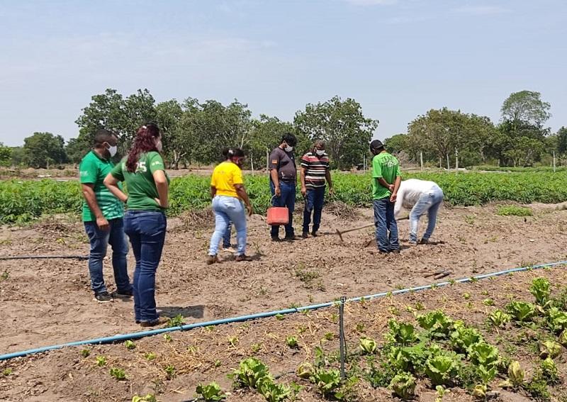 Em parceria com SENAR, Prefeitura de Marianópolis capacita produtores rurais em olericultura