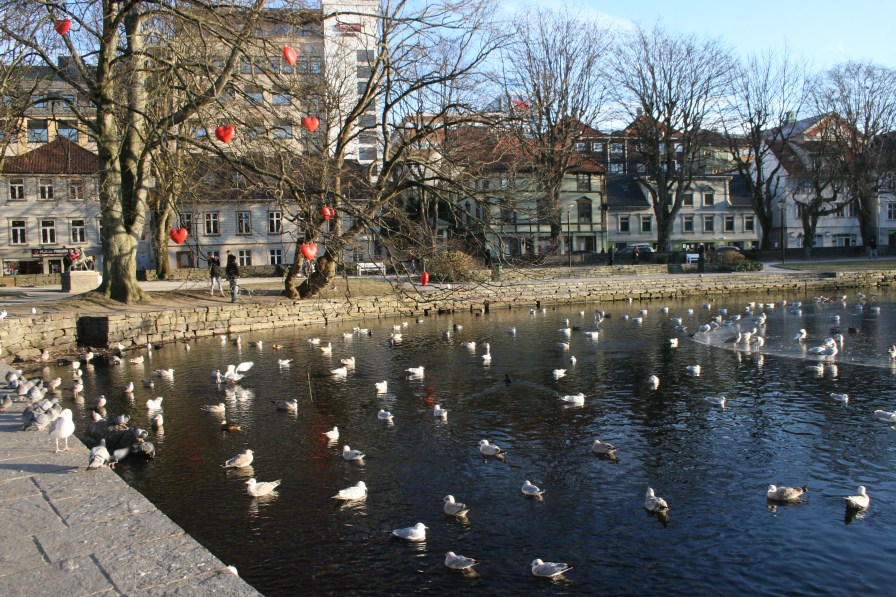 Lac central, Stavanger, novembre 2010