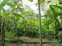 Agro-forest: multi-layers, benefitting reciprocally from each other