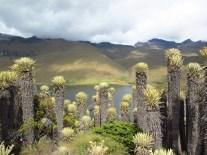 Paysages enchanteurs de la Laguna del Otun, 4000m, source du bassin versant