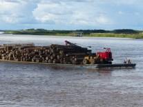 Comercio (ilegal?) de madera de la selva